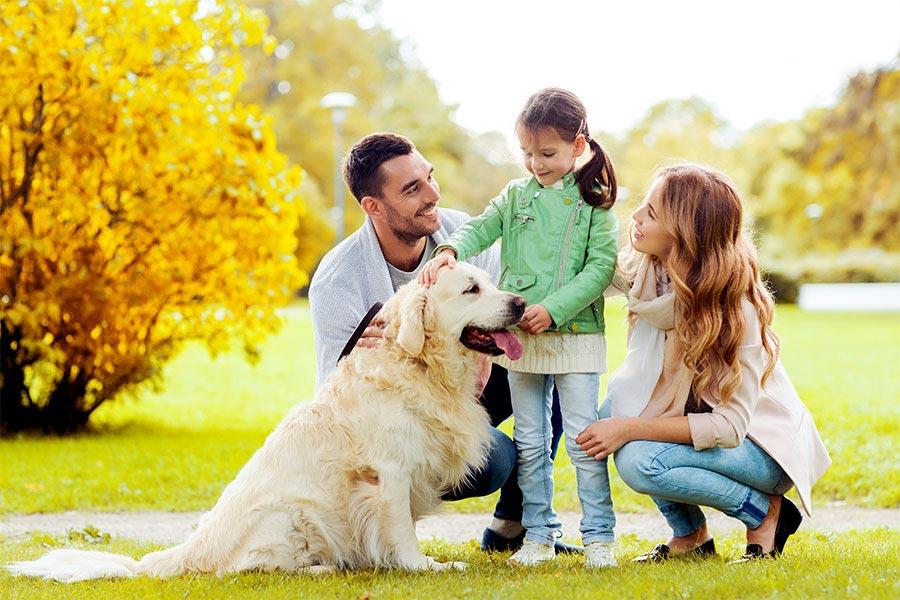 Podatek za psa – co warto o nim wiedzieć?